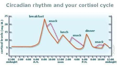 Cortisol Cycles